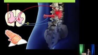 (7/11) Les effets neurologiques de l'ajustement chiropratique