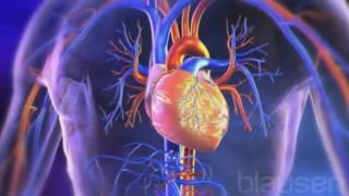 L'hypertension et les médicaments antihypertenseurs